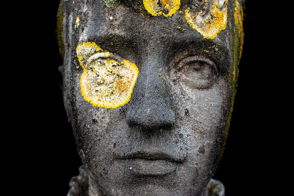 statue face marked with lichens