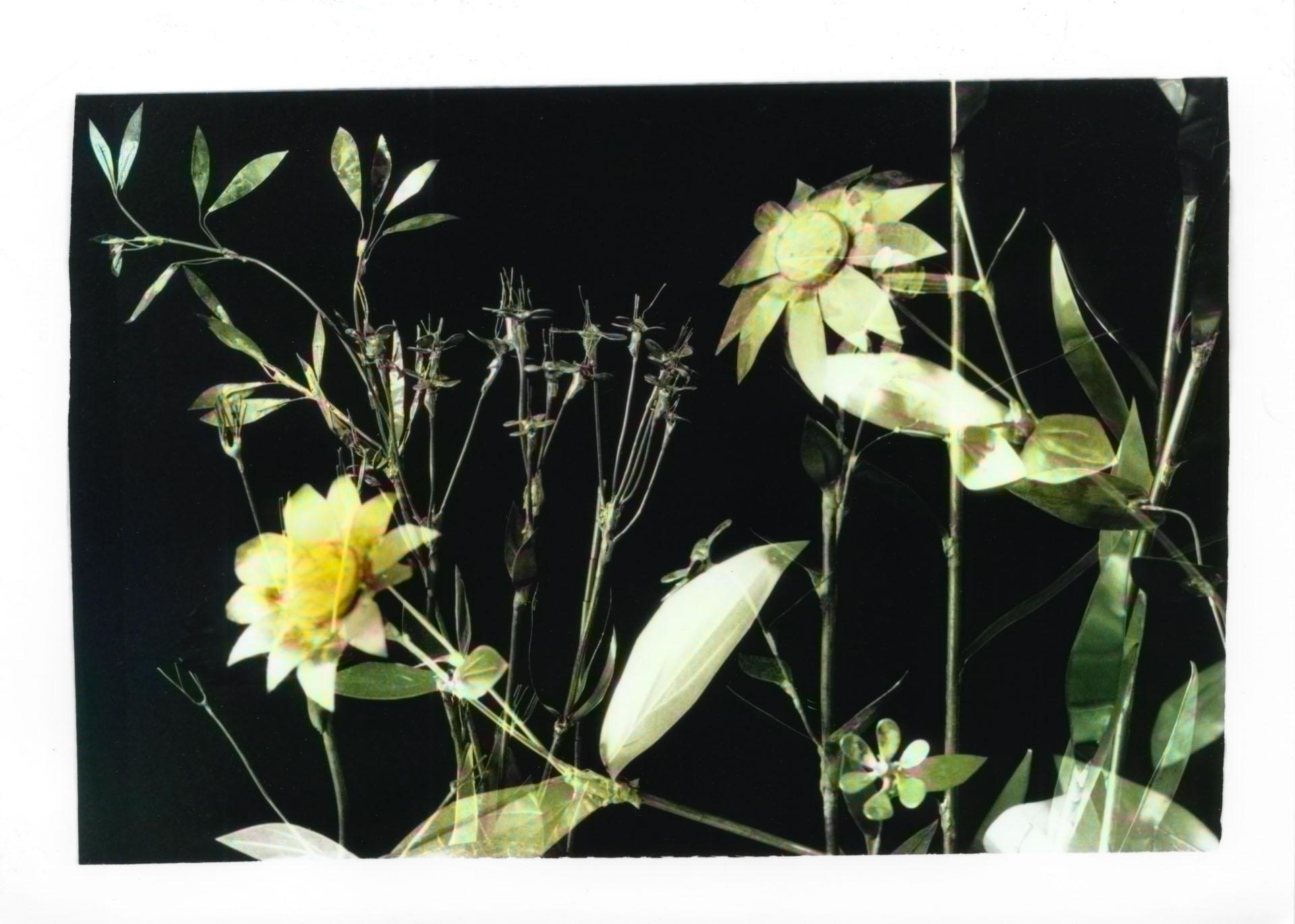 May photo of the Vivero Enredado calendar by Pieter Dedoncker and Jose Montealegre